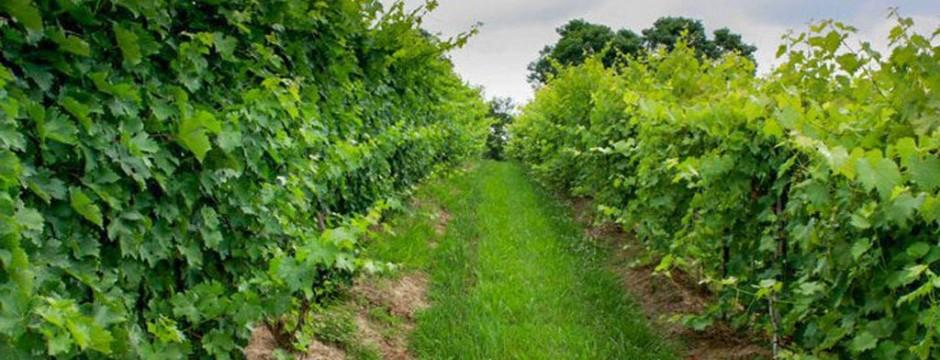 Generation Hill Winery
